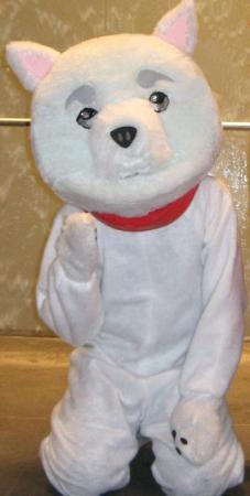Sadaharu from Gintama worn by Shining Seiya